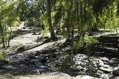 Les arbres s'approchent du fleuve Photographie stock libre de droits