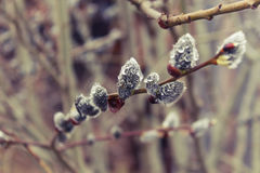 Les arbres se réveillent après l'hiver sous la pluie Photographie stock libre de droits