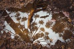 Les arbres se reflétants de magma et un oiseau photographie stock libre de droits