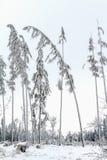 Les arbres se sont dépliés sous le poids de neige et de gel Photographie stock