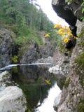 Les arbres se sont reflétés en rivière canadienne en automne 3 photo libre de droits