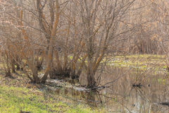 Les arbres se tenant dans l'eau Image libre de droits