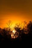 Les arbres silhouettent au coucher du soleil Image stock