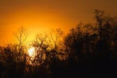 Les arbres silhouettent au coucher du soleil Photo libre de droits