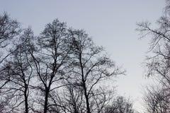 Les arbres silhouettent sur le fond de ciel Photographie stock