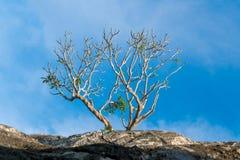 Les arbres sont à feuilles caduques Image libre de droits