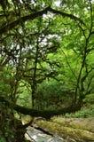 Les arbres sont couverts de la mousse Images stock