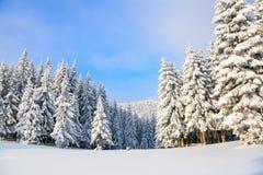 Les arbres sous la neige sont sur la pelouse Photos libres de droits