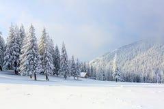 Les arbres sous la neige sont sur la pelouse Photo libre de droits