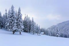 Les arbres sous la neige sont sur la pelouse Image libre de droits