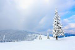 Les arbres sous la neige sont sur la pelouse Photo stock
