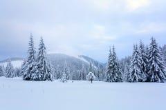 Les arbres sous la neige sont sur la pelouse Image stock