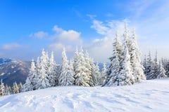Les arbres sous la neige sont sur la pelouse Images libres de droits
