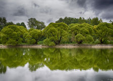 Les arbres sur la banque Image stock