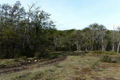 Les arbres sur le rivage de Lago Blanco Photographie stock libre de droits