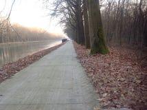 Les arbres sur les lignes Image libre de droits