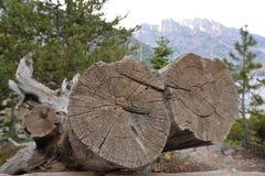 Les arbres tombés en parc national grand de Teton apparaissent souvent comme oeuvres d'art pour un photographe photo stock