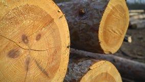 Les arbres tombés par rondins se trouvent au sol un panorama doux banque de vidéos