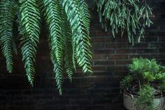 Les arbres verts contre des murs Photo libre de droits
