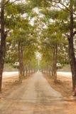 Les arbres verts de nature avec la route rurale font du vélo en parc tranquille au printemps au coucher du soleil ensoleillé Images stock