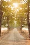 Les arbres verts de nature avec la route rurale font du vélo en parc tranquille au printemps au coucher du soleil ensoleillé Image libre de droits