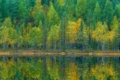 Les arbres verts et jaunes avec la réflexion dans l'eau immobile apprêtent Paysage de chute avec des arbres Arbres de bouleau ave Image stock