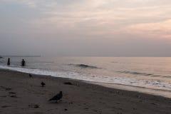 Les artistes ont imaginé une comparaison Pigeons sur la plage pendant le matin pendant le lever de soleil C'est un symbole de la  image libre de droits
