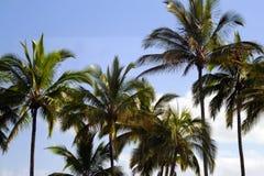 Les automnes d'arc-en-ciel est une cascade située dans Hilo, Hawaï Images stock
