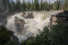 Les automnes d'Athabasca Images libres de droits