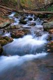 Les automnes de Douglas Photo libre de droits