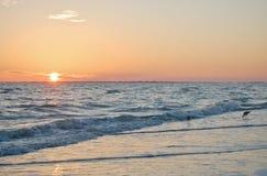 Bécasseaux au coucher du soleil Images libres de droits