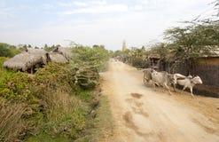 Les bétail transportent en charrette sur le chemin de terre Photographie stock