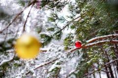 Les babioles jaunes et rouges colorées de Noël accrochant sur des branches d'arbre en hiver se garent Image stock