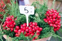 Les baies rouges et les feuilles vertes Photographie stock libre de droits