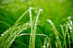 Les baisses de pluie sur l'herbe fraîche Images stock