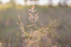 Les baisses de rosée sur des lames d'herbe pendant le matin refroidissent Photographie stock