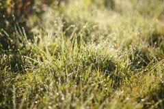 Les baisses de rosée sur l'herbe vert clair, champ, lever de soleil, lumière du soleil illumine la rosée et les herbes Image libre de droits