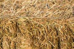 Les balles de paille de riz sur le riz mettent en place le fond, farmmin naturel de conception Images stock