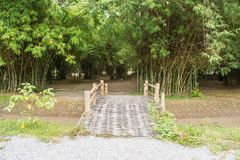 Les bambous incluent certaines des usines les plus à croissance rapide dans le monde Photos stock