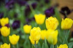 Les beautés de printemps sont dans la floraison photographie stock