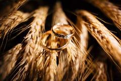 Les beaux anneaux de mariage se ferment vers le haut du tir sur le blé Photo libre de droits