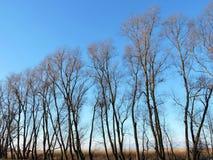 Les beaux arbres d'hiver s'approchent du lac, Lithuanie Photographie stock