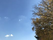 Les beaux arbres jaunes de ginkgo avec le ciel bleu lumineux dans le jour naturel s'allument avec l'espace de copie sur le côté g Image stock