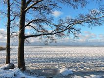 Les beaux arbres près de Curonian crachent en hiver, Lithuanie Photo libre de droits