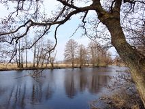 Les beaux arbres s'approchent du chanel, Lithuanie photos stock