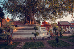 Les beaux bonsaïs font du jardinage dans le temple de Wat Pho Bangkok, Thaïlande Photographie stock