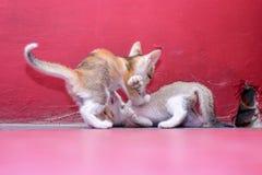 Les beaux chatons asseyent sur le plancher image libre de droits