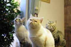 Les beaux chats dans une barre Image stock