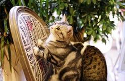 Les beaux chats dans une barre Photos stock