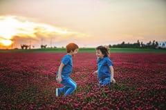 Les beaux enfants dans le trèfle incarnat magnifique mettent en place sur le coucher du soleil Photos libres de droits